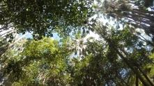 Looking up from Mataranka Thermal Pools, NT, Aus